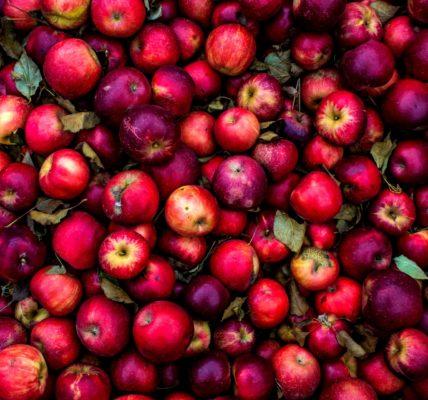 jabłka czerwone
