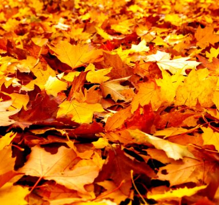 jesień liście park
