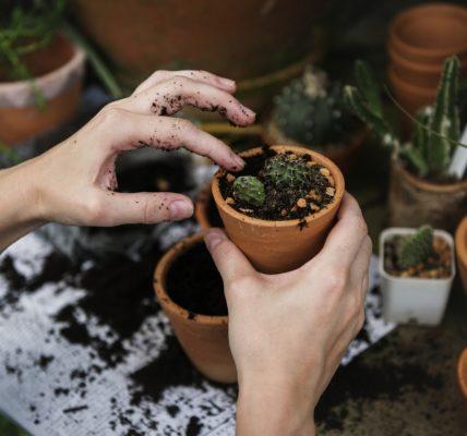 roślina doniczka kwiat kaktus ręce sadzenie kwiatów