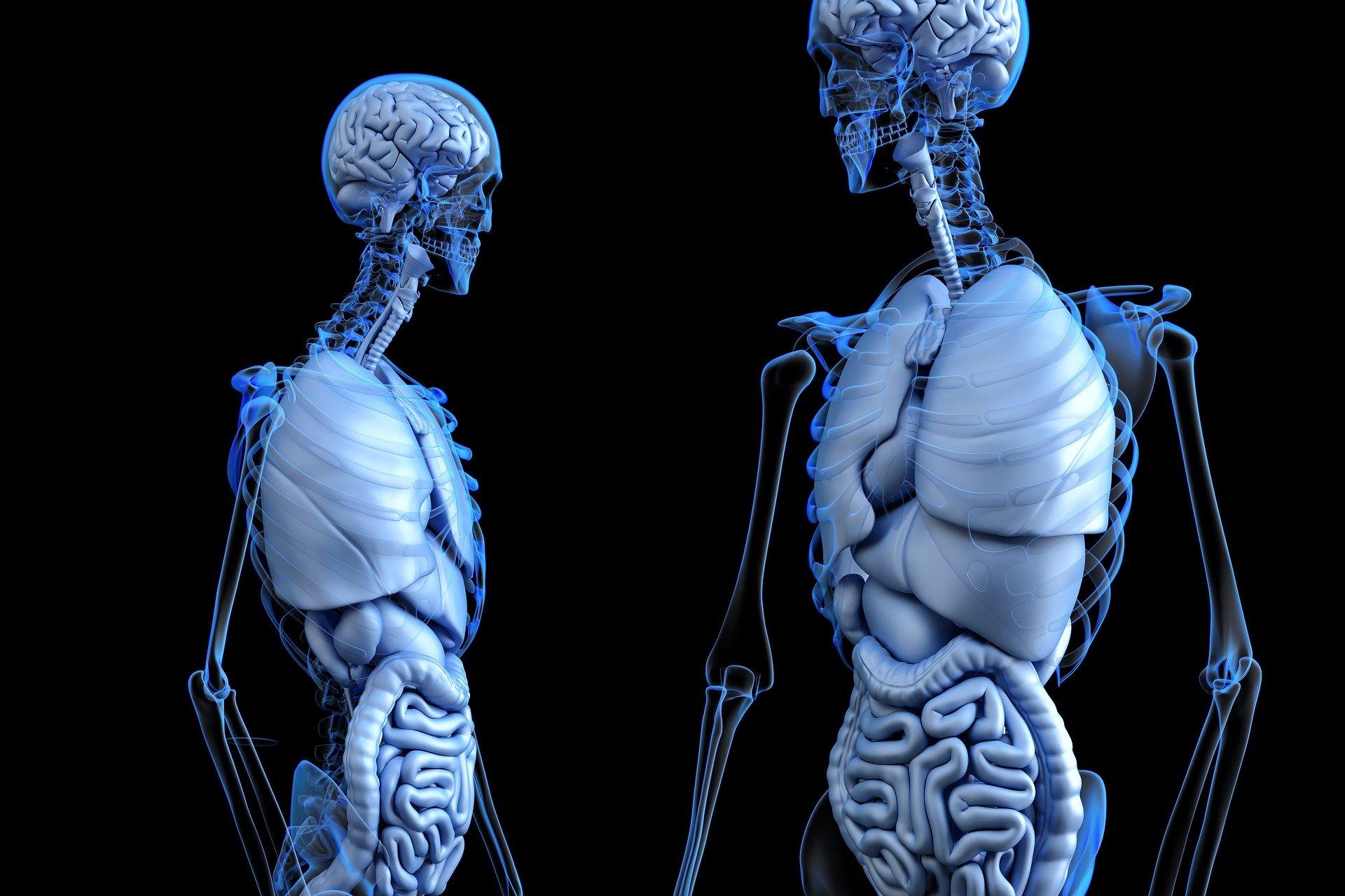 wątroba ból wątroby ciało człowiek